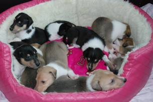 Puppies in Rosa´s basket