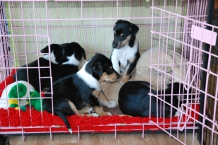 Gruppe im Kennel