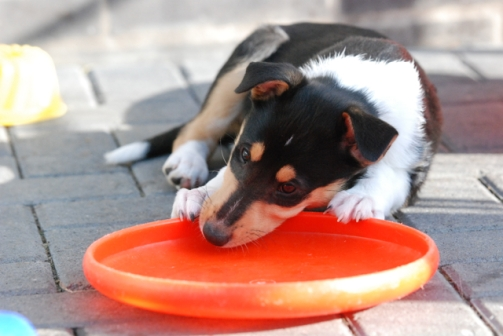 Mia Frisbee