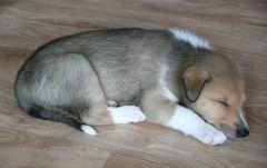 Blau schlafend