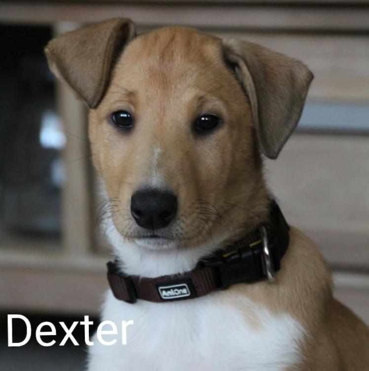 Dexter 10 Wochen
