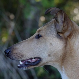 Dexter Profil