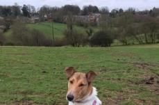 Davina at the English Countryside