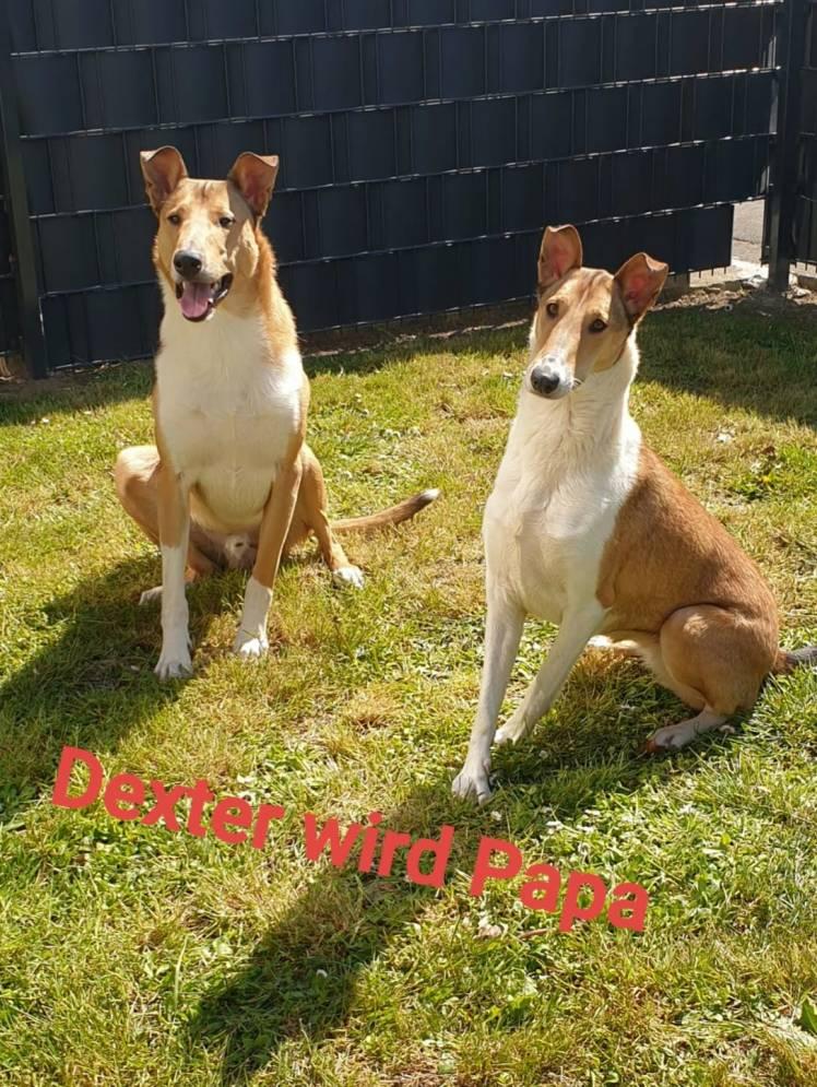 Dexter + Lily