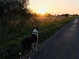 Bender Sunset